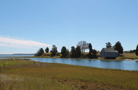 salt-pond-eastham
