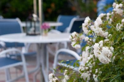flowers on teh patio with chairs and tables in the background