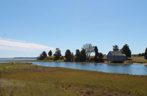 salt-pond-eastham