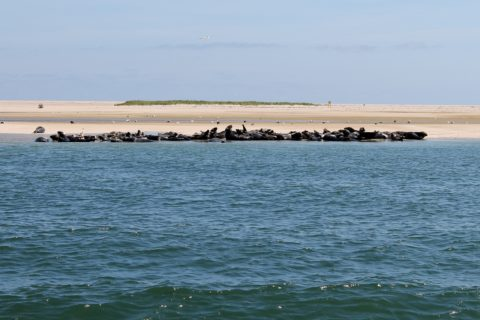 cape cod boating excursions